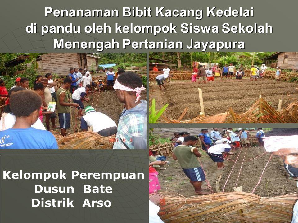 Penanaman Bibit Kacang Kedelai di pandu oleh kelompok Siswa Sekolah Menengah Pertanian Jayapura Kelompok Perempuan Dusun Bate Distrik Arso