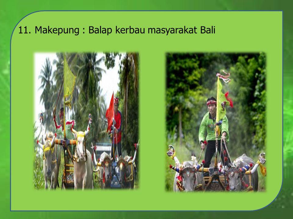 11. Makepung : Balap kerbau masyarakat Bali