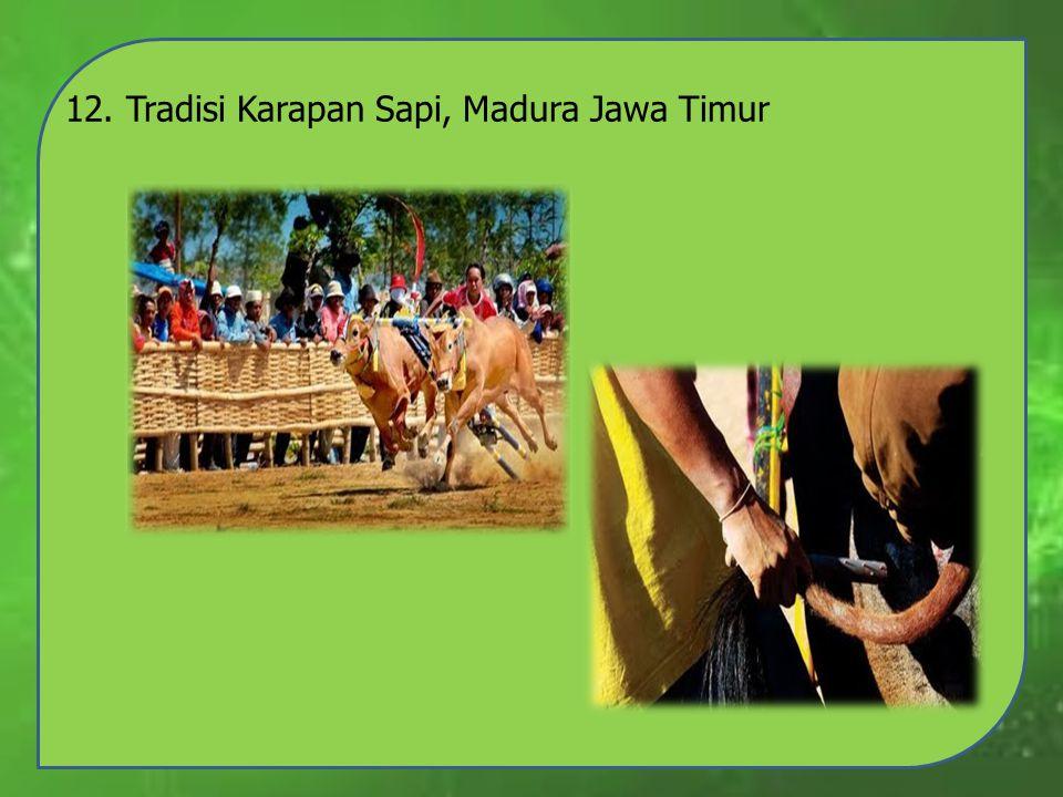 12. Tradisi Karapan Sapi, Madura Jawa Timur