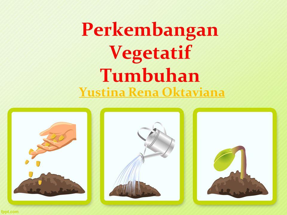 Perkembangan Vegetatif Tumbuhan Yustina Rena Oktaviana