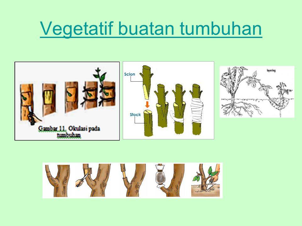 Vegetatif buatan tumbuhan