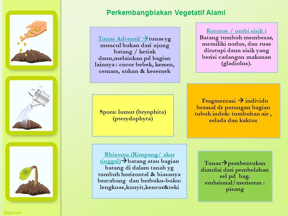 Spora: lumut (bryophita) (pterydophyta) Fragmentasi  individu berasal dr potongan bagian tubuh induk: tumbuhan air, selada dan kaktus Tunas  pembent