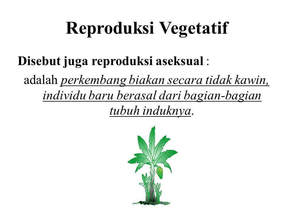 Reproduksi Vegetatif Disebut juga reproduksi aseksual : adalah perkembang biakan secara tidak kawin, individu baru berasal dari bagian-bagian tubuh induknya.