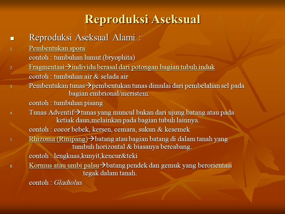 Reproduksi Aseksual Reproduksi Aseksual Alami : Reproduksi Aseksual Alami : 1. Pembentukan spora Pembentukan spora Pembentukan spora contoh : tumbuhan