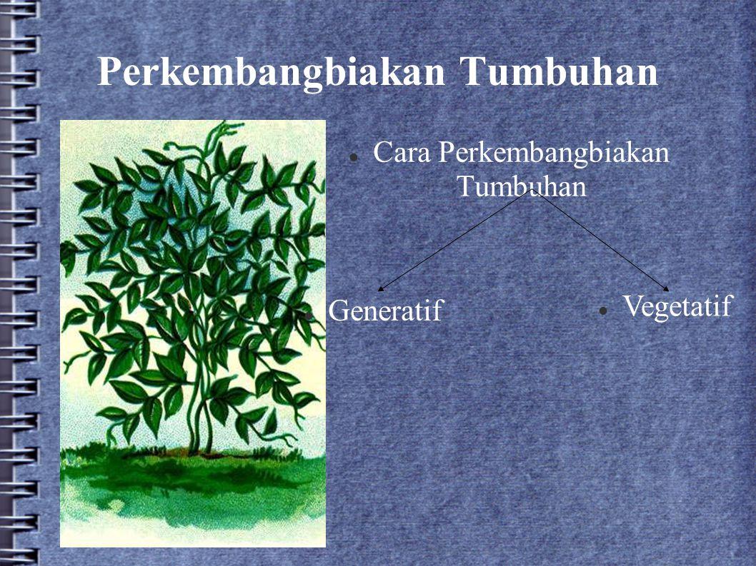 Perkembangbiakan Tumbuhan Cara Perkembangbiakan Tumbuhan Generatif Vegetatif