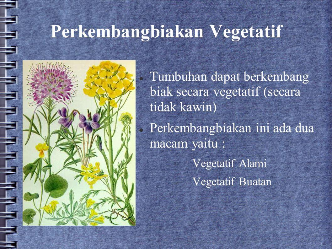 Perkembangbiakan Vegetatif Tumbuhan dapat berkembang biak secara vegetatif (secara tidak kawin) Perkembangbiakan ini ada dua macam yaitu :  Vegetatif
