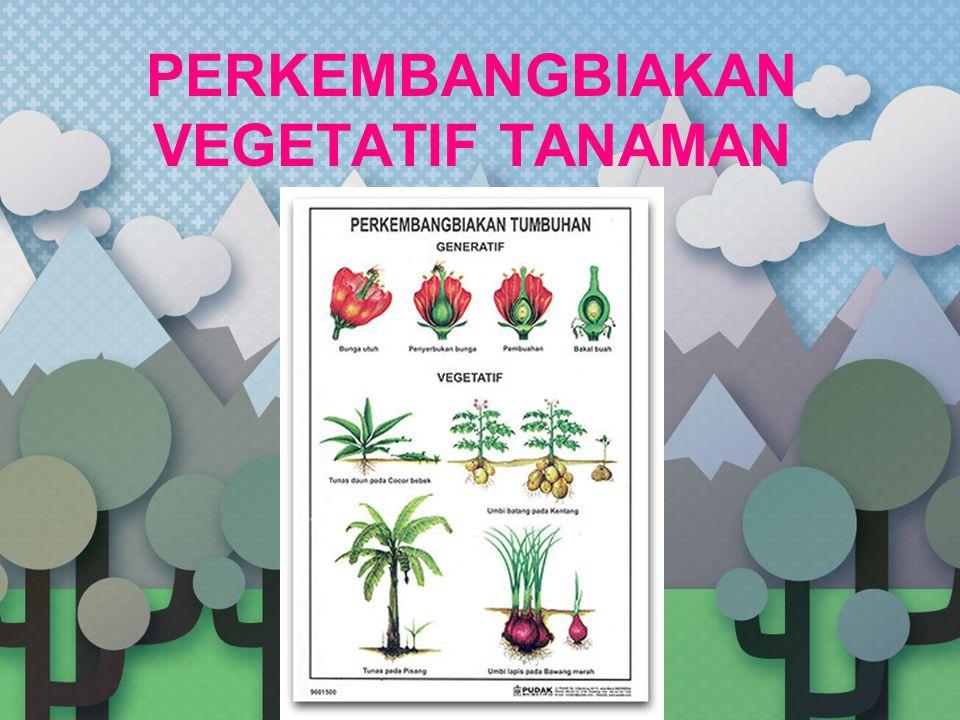 VEGETATIF BUATAN Menyambung (enten) Konsep  menyambung batang dengan varietas yang sama Memperbaiki sifat tanaman yang sudah tumbuh Kelemahan  hasil bisa tidak sesuai harapan Biasa digunakan untuk segala jenis tanaman bunga, buah, maupun hias