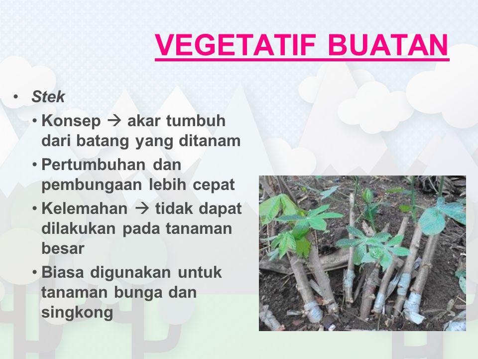 VEGETATIF BUATAN Stek Konsep  akar tumbuh dari batang yang ditanam Pertumbuhan dan pembungaan lebih cepat Kelemahan  tidak dapat dilakukan pada tanaman besar Biasa digunakan untuk tanaman bunga dan singkong