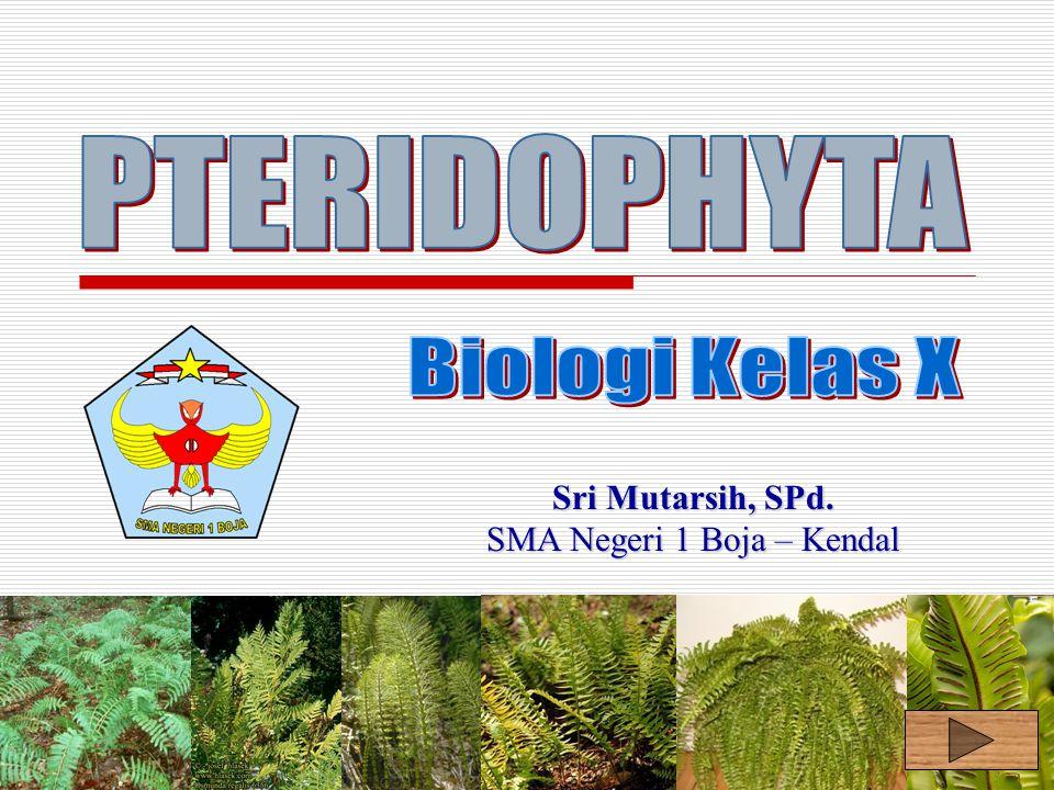 Back Spora Protalium Anteridium Arkegonium Sperma Ovum Zygot Tumb.