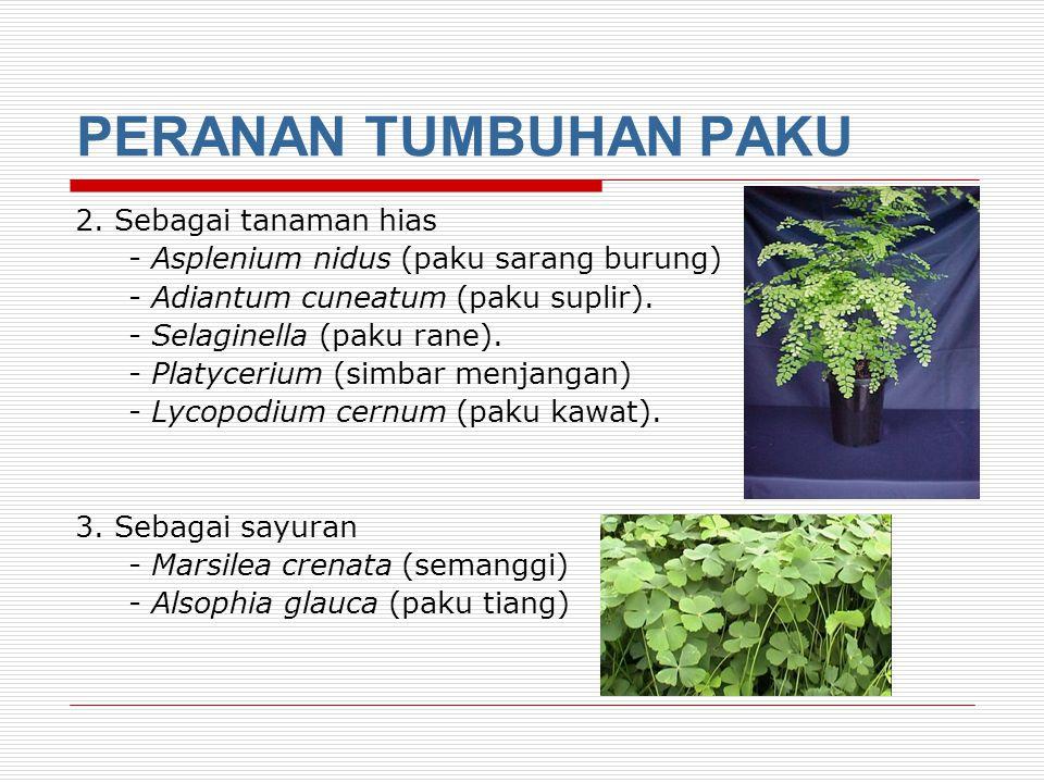 PERANAN TUMBUHAN PAKU 1.Bahan obat-obatan - Lycopodium clavatum (paku kawat), Dryopteris felix mas untuk obat batuk, sesak napas penyakit bisul pada kulit.