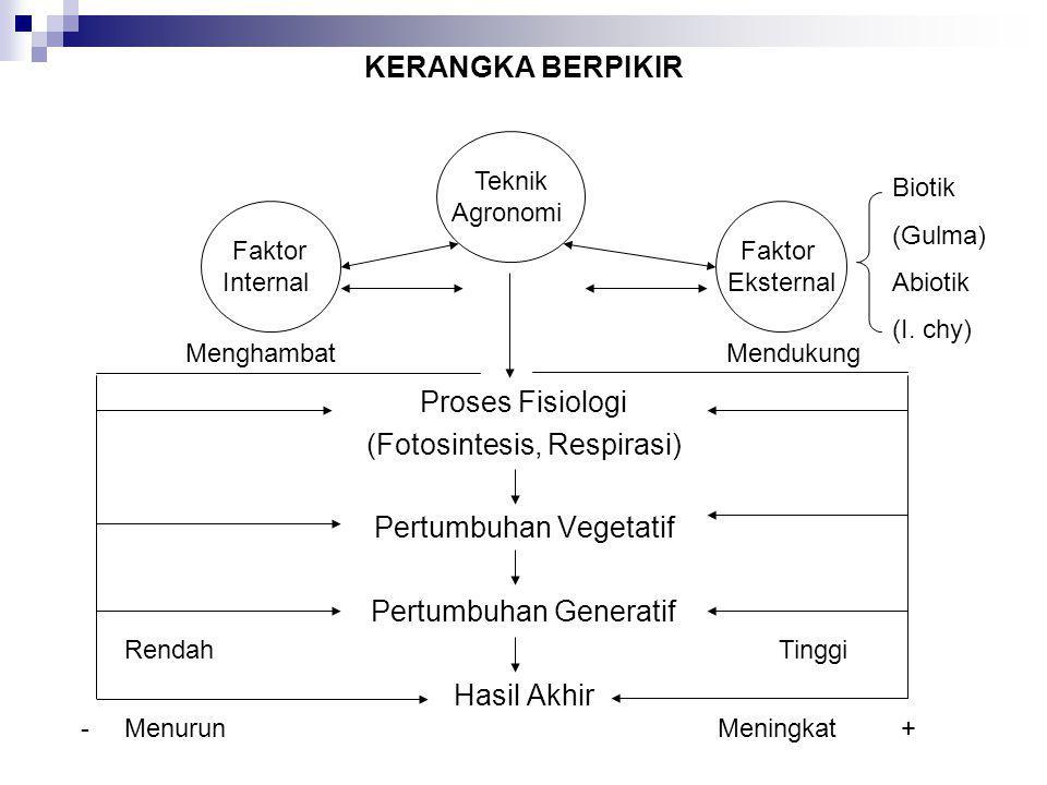 KERANGKA BERPIKIR Proses Fisiologi (Fotosintesis, Respirasi) Pertumbuhan Vegetatif Pertumbuhan Generatif Hasil Akhir Teknik Agronomi Faktor Internal F
