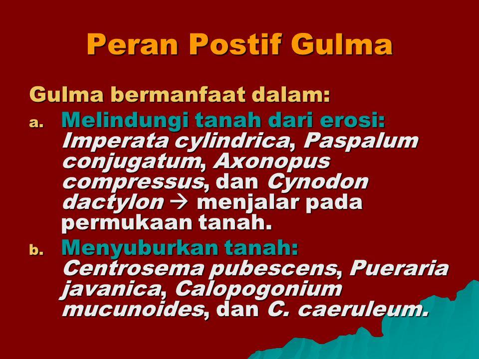 Peran Postif Gulma Gulma bermanfaat dalam: a. Melindungi tanah dari erosi: Imperata cylindrica, Paspalum conjugatum, Axonopus compressus, dan Cynodon