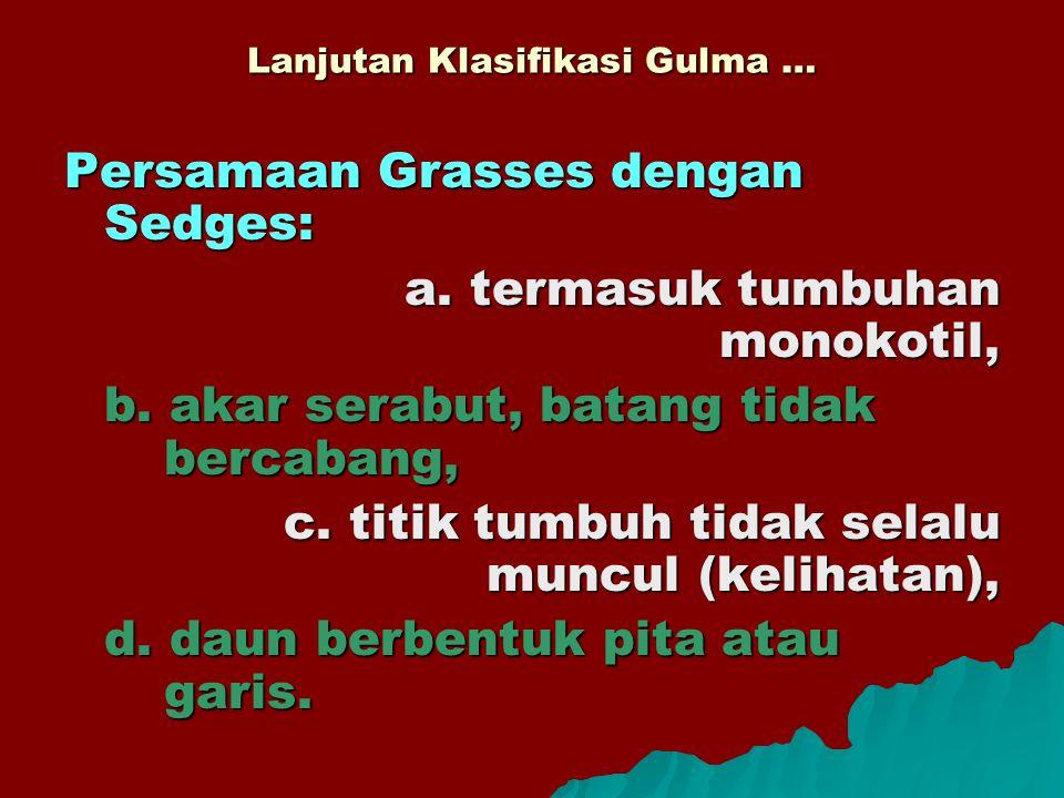 Lanjutan Klasifikasi Gulma … Persamaan Grasses dengan Sedges: a. termasuk tumbuhan monokotil, b. akar serabut, batang tidak bercabang, c. titik tumbuh