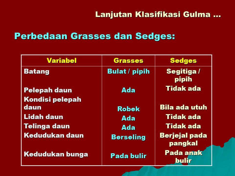 Lanjutan Klasifikasi Gulma … Perbedaan Grasses dan Sedges: VariabelGrassesSedges Batang Pelepah daun Kondisi pelepah daun Lidah daun Telinga daun Kedu