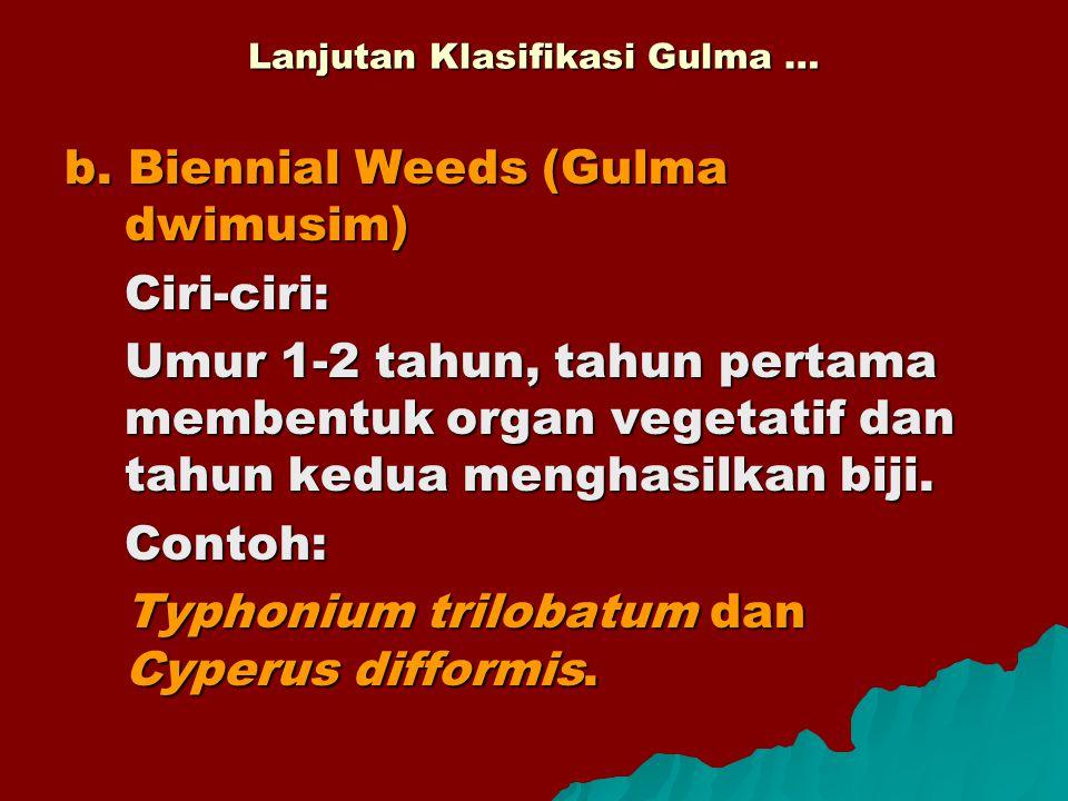 b. Biennial Weeds (Gulma dwimusim) Ciri-ciri: Umur 1-2 tahun, tahun pertama membentuk organ vegetatif dan tahun kedua menghasilkan biji. Contoh: Typho