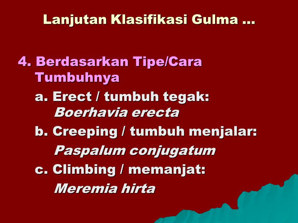 Lanjutan Klasifikasi Gulma … 4. Berdasarkan Tipe/Cara Tumbuhnya a. Erect / tumbuh tegak: Boerhavia erecta b. Creeping / tumbuh menjalar: Paspalum conj