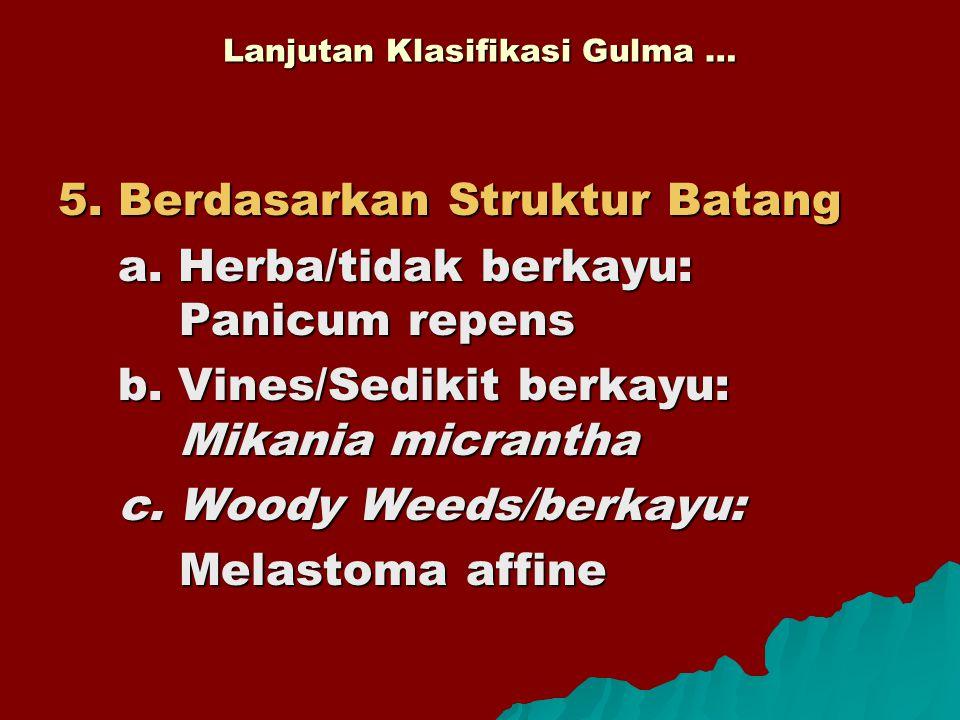 Lanjutan Klasifikasi Gulma … 5. Berdasarkan Struktur Batang a. Herba/tidak berkayu: Panicum repens b. Vines/Sedikit berkayu: Mikania micrantha c. Wood
