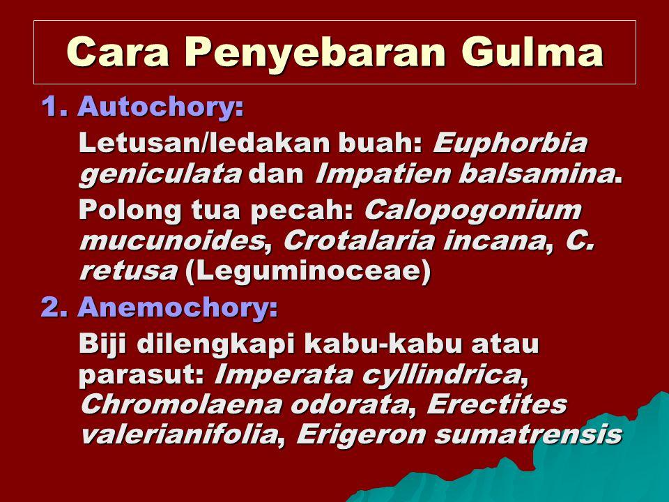 Cara Penyebaran Gulma 1. Autochory: Letusan/ledakan buah: Euphorbia geniculata dan Impatien balsamina. Polong tua pecah: Calopogonium mucunoides, Crot