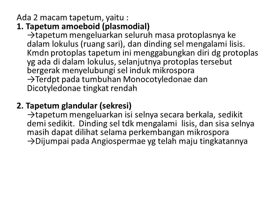 Ada 2 macam tapetum, yaitu : 1. Tapetum amoeboid (plasmodial) →tapetum mengeluarkan seluruh masa protoplasnya ke dalam lokulus (ruang sari), dan dindi