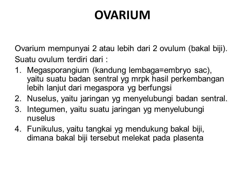 OVARIUM Ovarium mempunyai 2 atau lebih dari 2 ovulum (bakal biji). Suatu ovulum terdiri dari : 1.Megasporangium (kandung lembaga=embryo sac), yaitu su