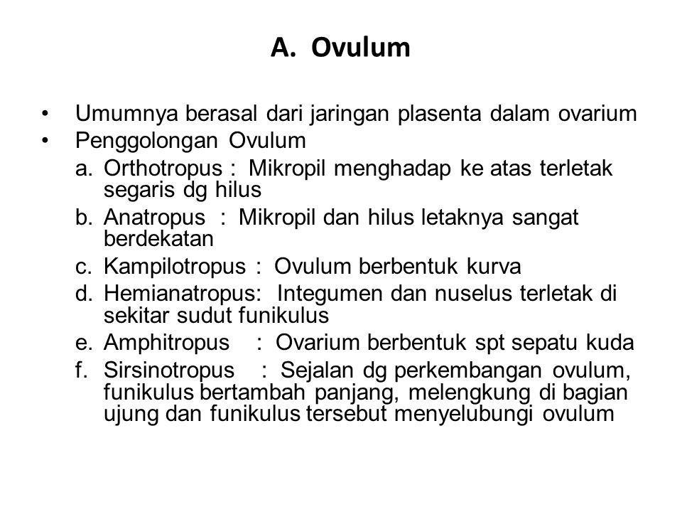 A. Ovulum Umumnya berasal dari jaringan plasenta dalam ovarium Penggolongan Ovulum a.Orthotropus : Mikropil menghadap ke atas terletak segaris dg hilu