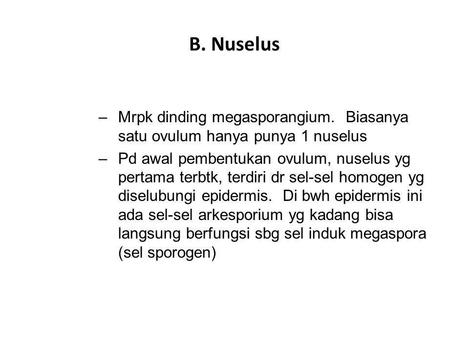 B. Nuselus –Mrpk dinding megasporangium. Biasanya satu ovulum hanya punya 1 nuselus –Pd awal pembentukan ovulum, nuselus yg pertama terbtk, terdiri dr