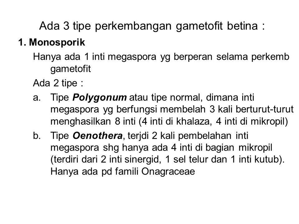 Ada 3 tipe perkembangan gametofit betina : 1. Monosporik Hanya ada 1 inti megaspora yg berperan selama perkemb gametofit Ada 2 tipe : a.Tipe Polygonum