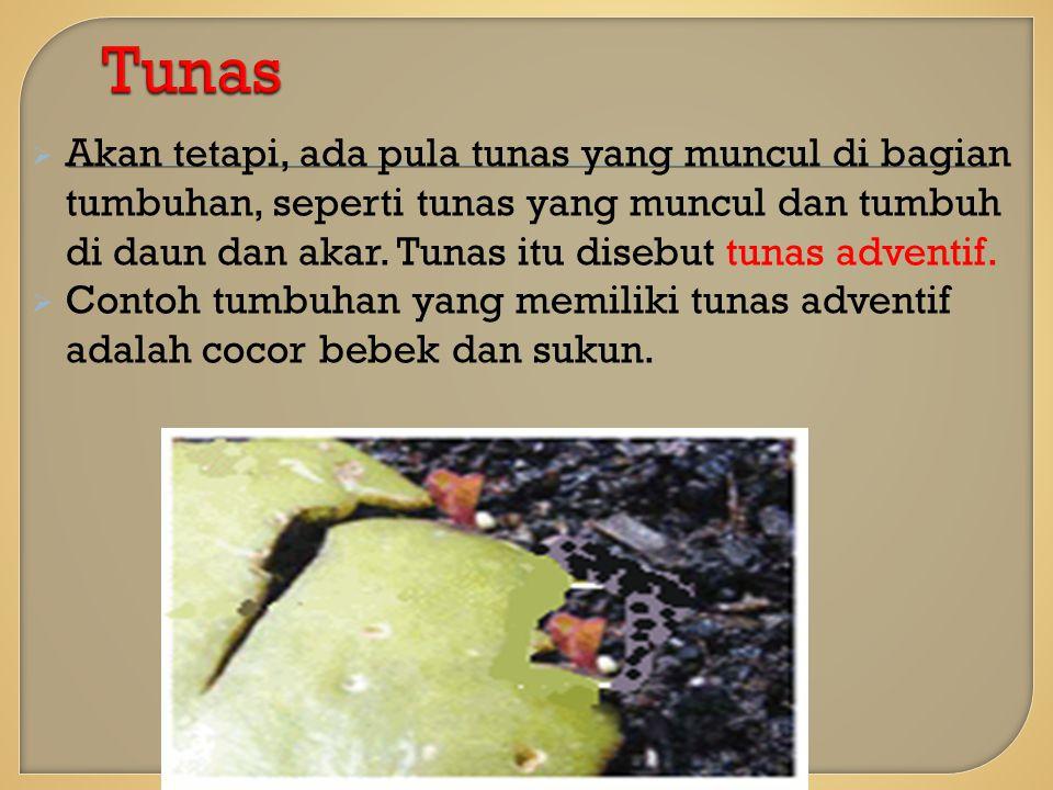  Akan tetapi, ada pula tunas yang muncul di bagian tumbuhan, seperti tunas yang muncul dan tumbuh di daun dan akar.