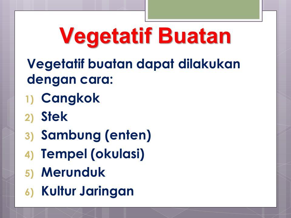 Vegetatif Buatan Vegetatif buatan dapat dilakukan dengan cara: 1) Cangkok 2) Stek 3) Sambung (enten) 4) Tempel (okulasi) 5) Merunduk 6) Kultur Jaringan