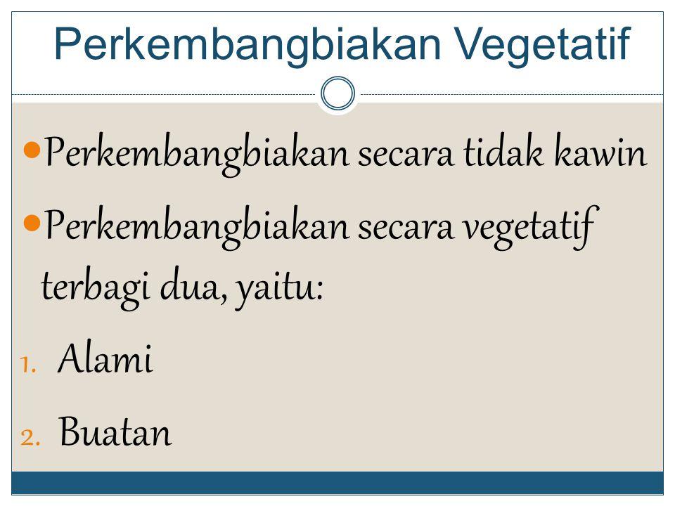 Perkembangbiakan Vegetatif Perkembangbiakan secara tidak kawin Perkembangbiakan secara vegetatif terbagi dua, yaitu: 1.
