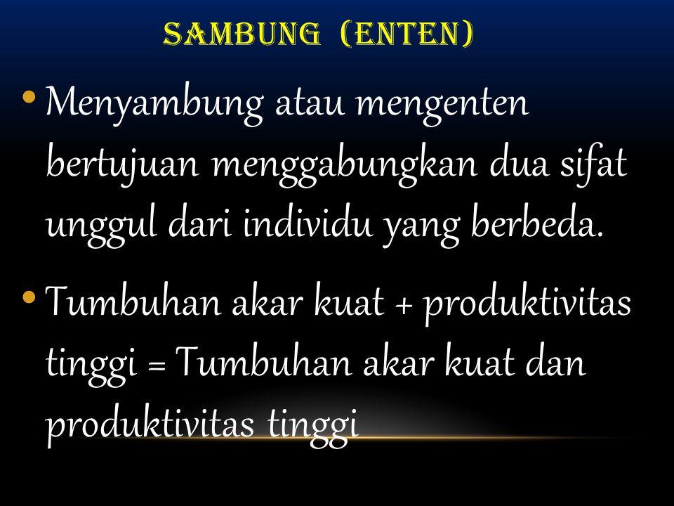 SAMBUNG (ENTEN) Menyambung atau mengenten bertujuan menggabungkan dua sifat unggul dari individu yang berbeda.
