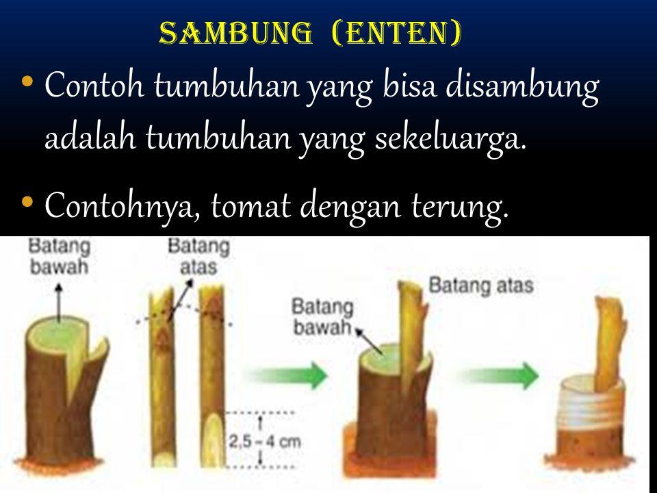 SAMBUNG (ENTEN) Contoh tumbuhan yang bisa disambung adalah tumbuhan yang sekeluarga.