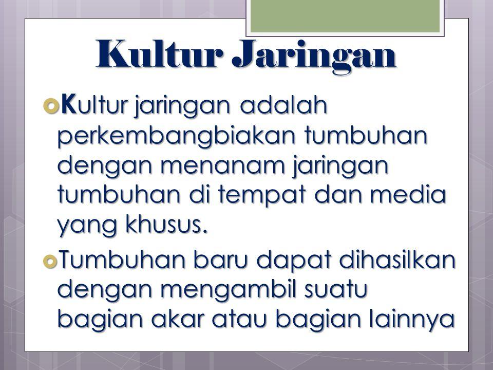 Kultur Jaringan  K ultur jaringan adalah perkembangbiakan tumbuhan dengan menanam jaringan tumbuhan di tempat dan media yang khusus.