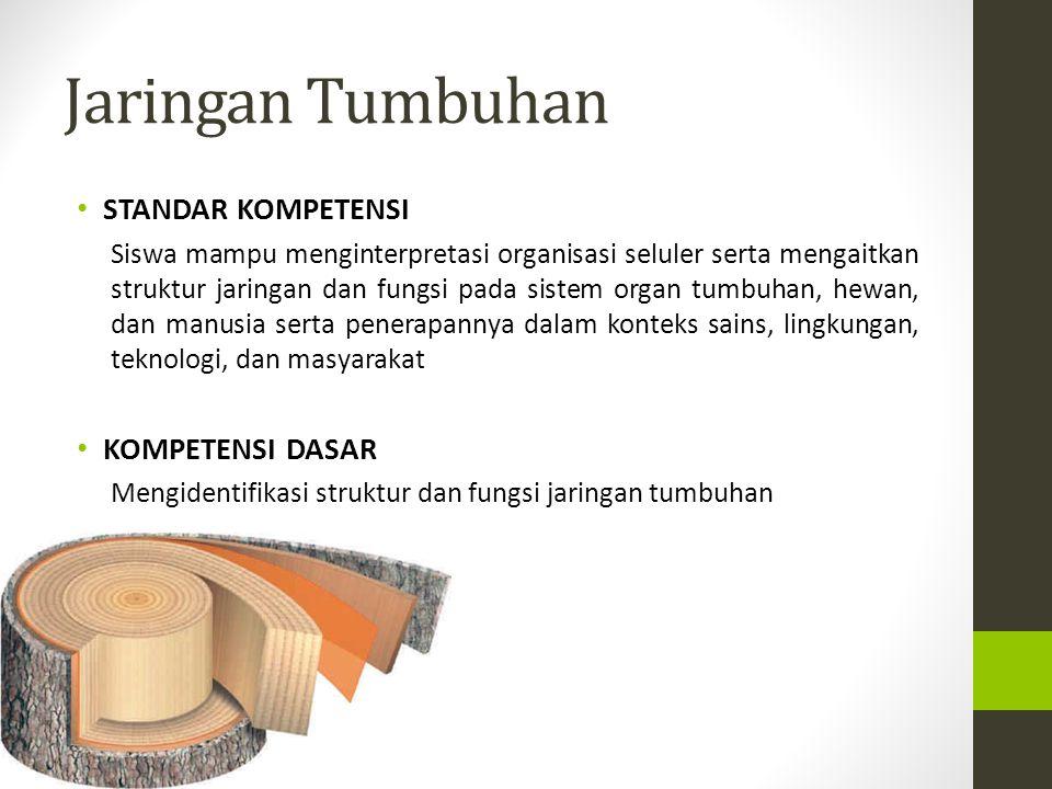 AKAR Pd penampang membujur akar : Pd penampang membujur akar : tudung akar, daerah pembelahan sel.