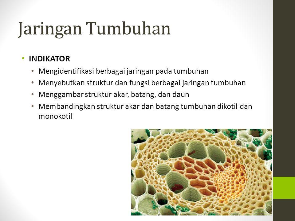 DERIVAT EPIDERMIS Merupakan sel epidermis yg mengalami diferensiasi : Stoma : 2 sel penutup yg mengandung kloroplas & plasma banyak.