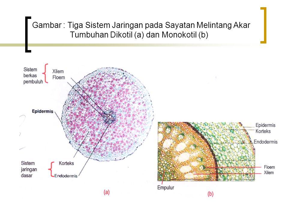 Gambar : Tiga Sistem Jaringan pada Sayatan Melintang Akar Tumbuhan Dikotil (a) dan Monokotil (b)