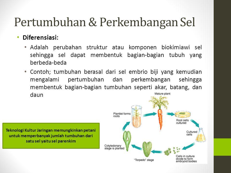 Pertumbuhan & Perkembangan Sel Diferensiasi: Adalah perubahan struktur atau komponen biokimiawi sel sehingga sel dapat membentuk bagian-bagian tubuh y