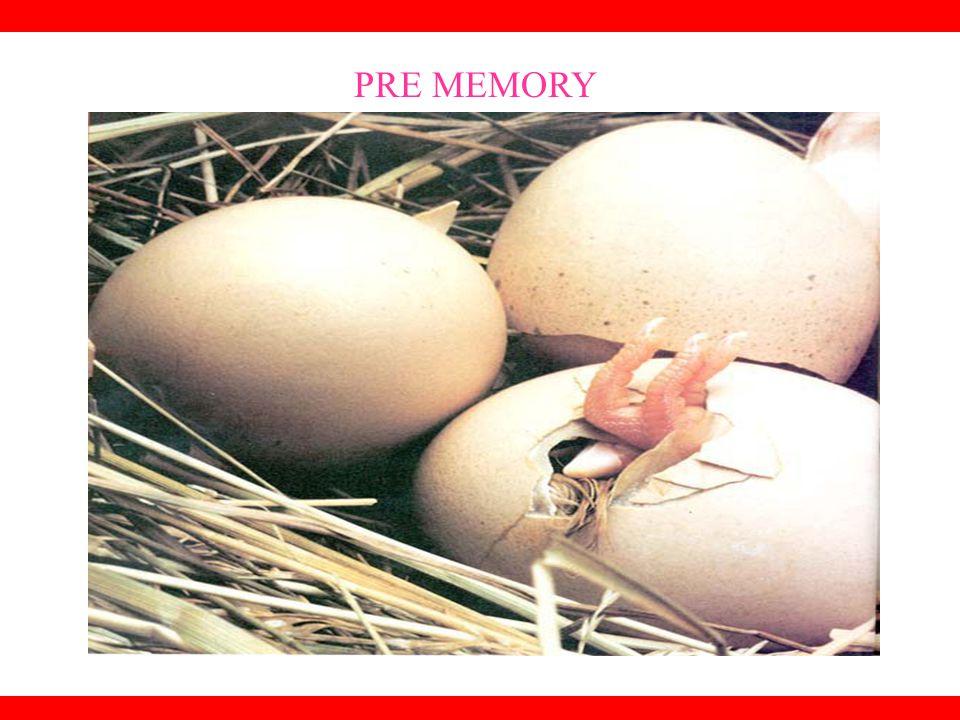 PRE MEMORY