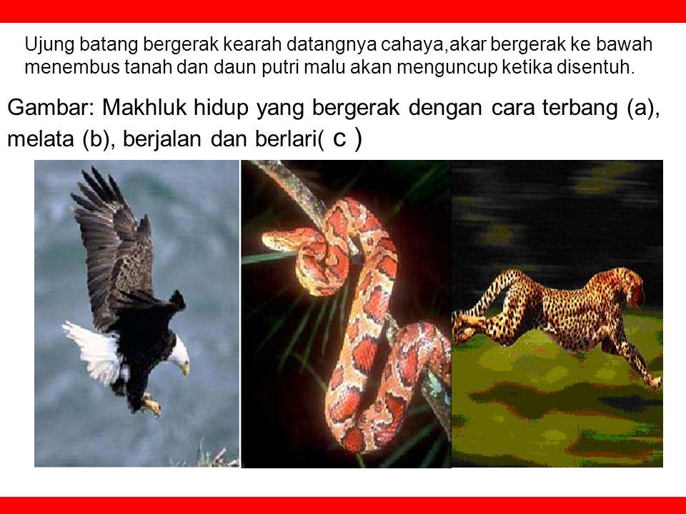 English-UN SMP 2009 — @ Ot Setiawan Djuharie 2.Move / Bergerak All of organism can move Bergerak adalah ciri dari suatu makhluk hidup. Burung terbang