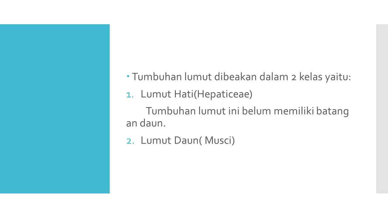  Tumbuhan lumut dibeakan dalam 2 kelas yaitu: 1.Lumut Hati(Hepaticeae) Tumbuhan lumut ini belum memiliki batang an daun.