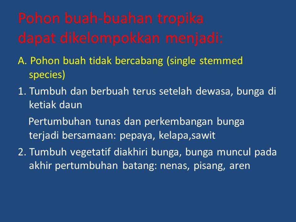 Pohon buah-buahan tropika dapat dikelompokkan menjadi: A. Pohon buah tidak bercabang (single stemmed species) 1. Tumbuh dan berbuah terus setelah dewa