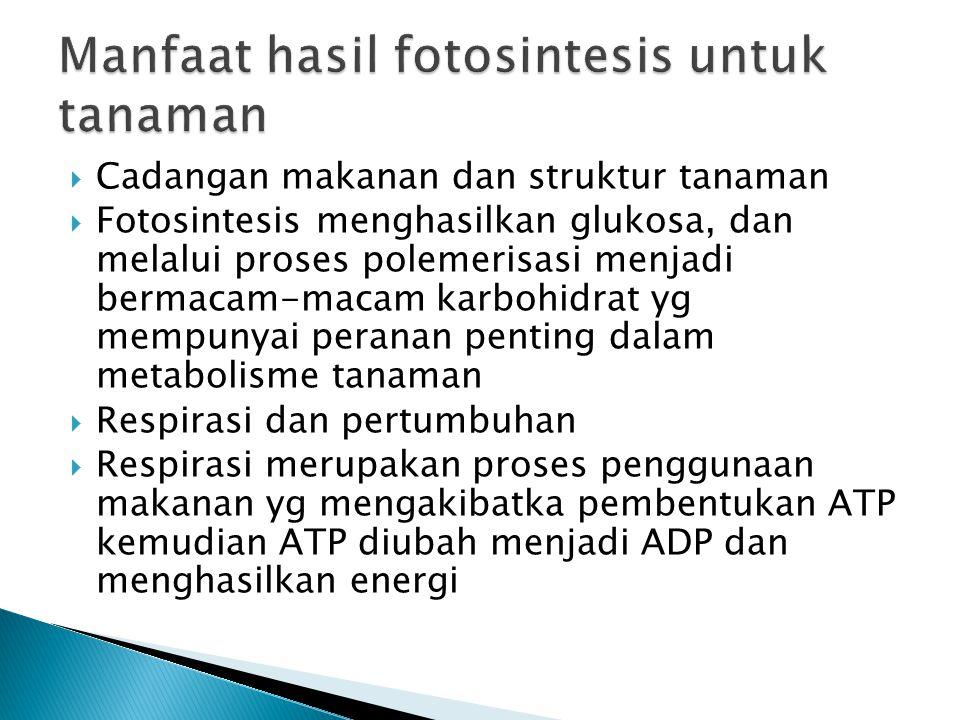  Cadangan makanan dan struktur tanaman  Fotosintesis menghasilkan glukosa, dan melalui proses polemerisasi menjadi bermacam-macam karbohidrat yg mempunyai peranan penting dalam metabolisme tanaman  Respirasi dan pertumbuhan  Respirasi merupakan proses penggunaan makanan yg mengakibatka pembentukan ATP kemudian ATP diubah menjadi ADP dan menghasilkan energi
