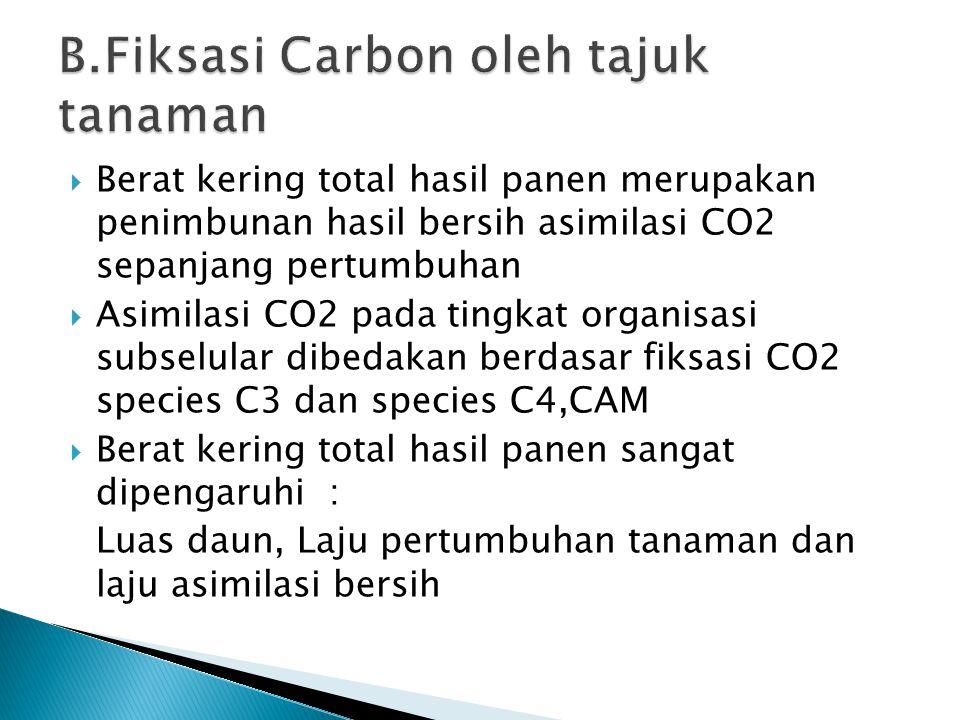  Berat kering total hasil panen merupakan penimbunan hasil bersih asimilasi CO2 sepanjang pertumbuhan  Asimilasi CO2 pada tingkat organisasi subselular dibedakan berdasar fiksasi CO2 species C3 dan species C4,CAM  Berat kering total hasil panen sangat dipengaruhi : Luas daun, Laju pertumbuhan tanaman dan laju asimilasi bersih