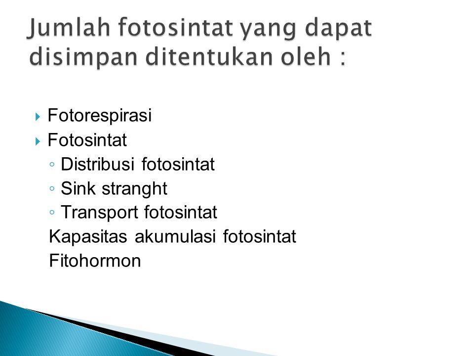  Fotorespirasi  Fotosintat ◦ Distribusi fotosintat ◦ Sink stranght ◦ Transport fotosintat Kapasitas akumulasi fotosintat Fitohormon