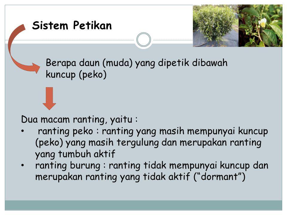 Sistem Petikan Berapa daun (muda) yang dipetik dibawah kuncup (peko) Dua macam ranting, yaitu : ranting peko : ranting yang masih mempunyai kuncup (pe