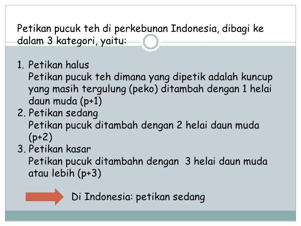 Petikan pucuk teh di perkebunan Indonesia, dibagi ke dalam 3 kategori, yaitu: 1.Petikan halus Petikan pucuk teh dimana yang dipetik adalah kuncup yang