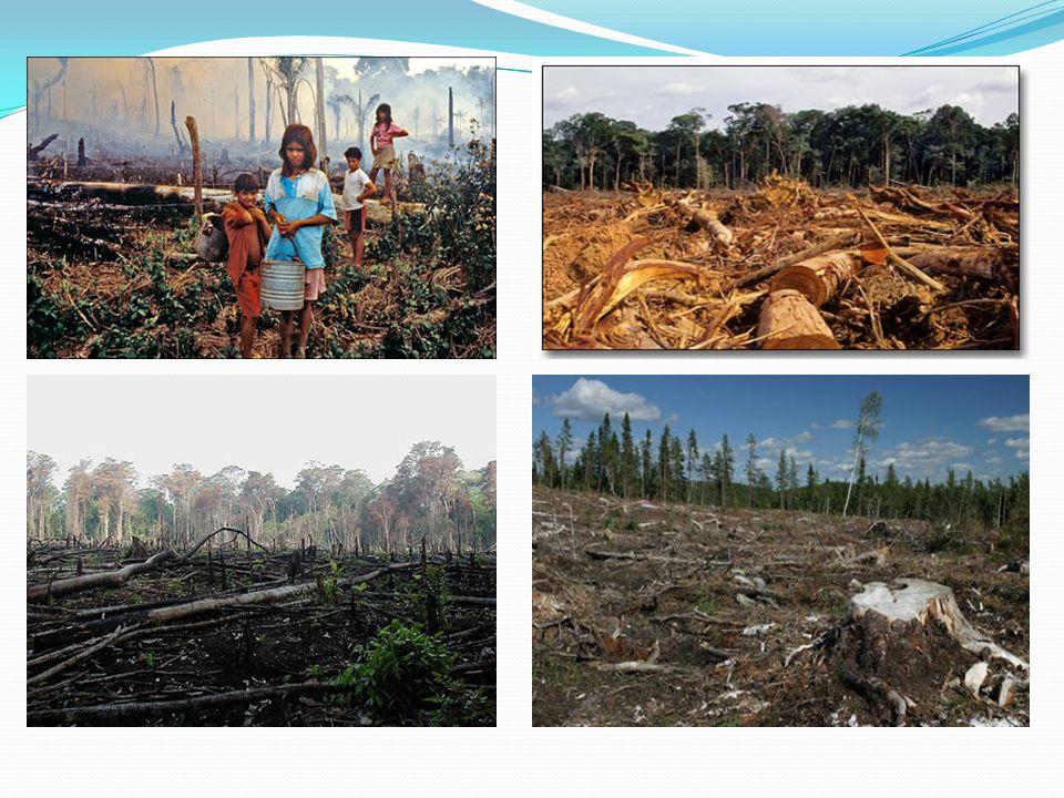 Di dalam kawasan hutan Afforestation Penanaman jenis-jenis pohon hutan pada lahan yang belum pernah ditumbuhi pohon- pohon hutan Reforestation/reboisasi Pembinaan dengan penanaman pada lahan yang semula berhutan dengan menggunakan jenis-jenis yang berbeda dengan jenis semula Hutan Tanaman Tegakan pohon/hutan yang dibina dengan penebaran biji/benih atau dengan penanaman bibit/anakan