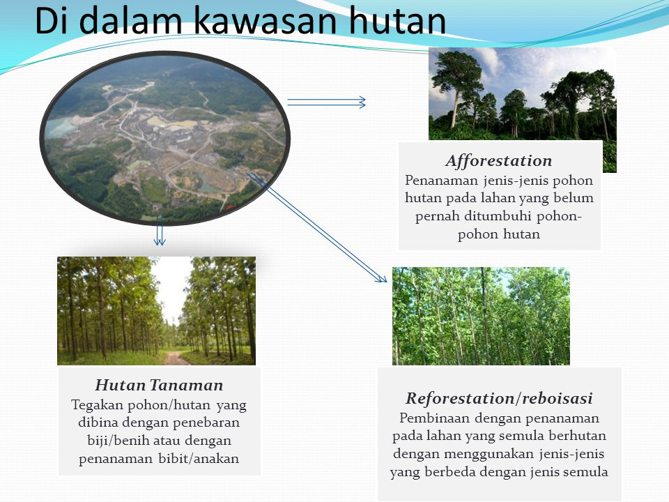 Di dalam kawasan hutan Afforestation Penanaman jenis-jenis pohon hutan pada lahan yang belum pernah ditumbuhi pohon- pohon hutan Reforestation/reboisa