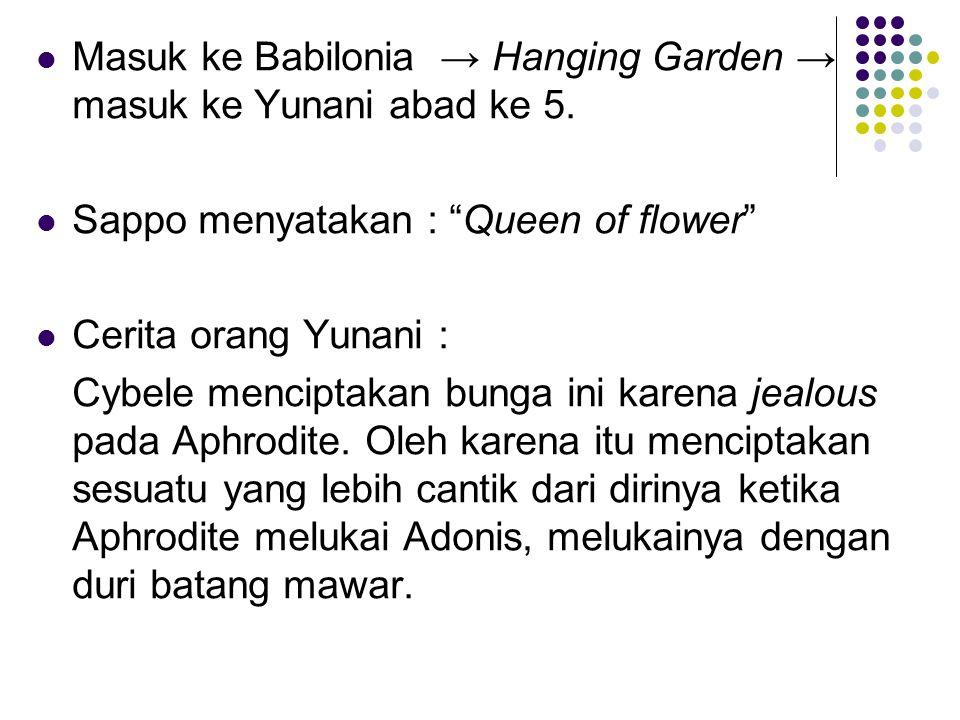 Darahnya melahirkan mawar merah.Oleh karena itu menjadi simbol Aphrodite aurora dan Cupid.