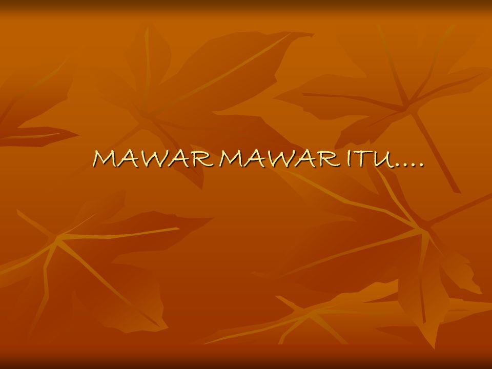 MAWAR MAWAR ITU….